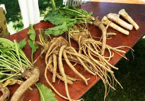 http://gipmed.ru/images/horseradish.jpg